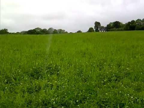 dog jumping around long grass