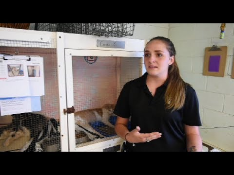 The plight of Okaloosa's unwanted cats and dogs - News