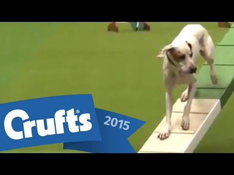 Agility - Crufts Large Novice and Medium ABC Final | Crufts 2015