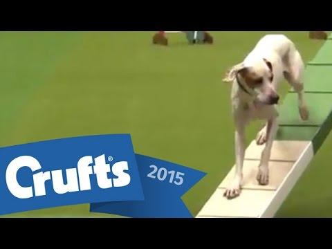 Agility - Crufts Large Novice and Medium ABC Final | Crufts 2015