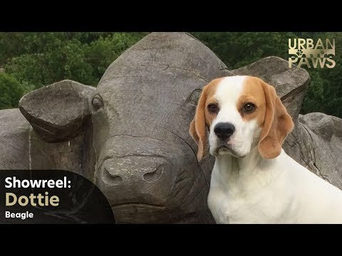 Dog Training: Showreel for Dottie (Beagle)