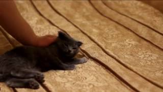 кальцевирусная инфекция кошек. Самостоятельное  лечение.