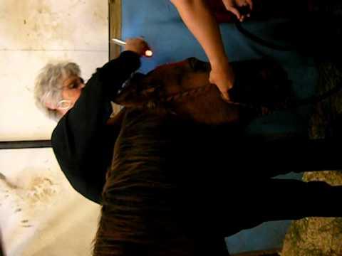 Michelle Deck-Mare finishing head problem.AVI