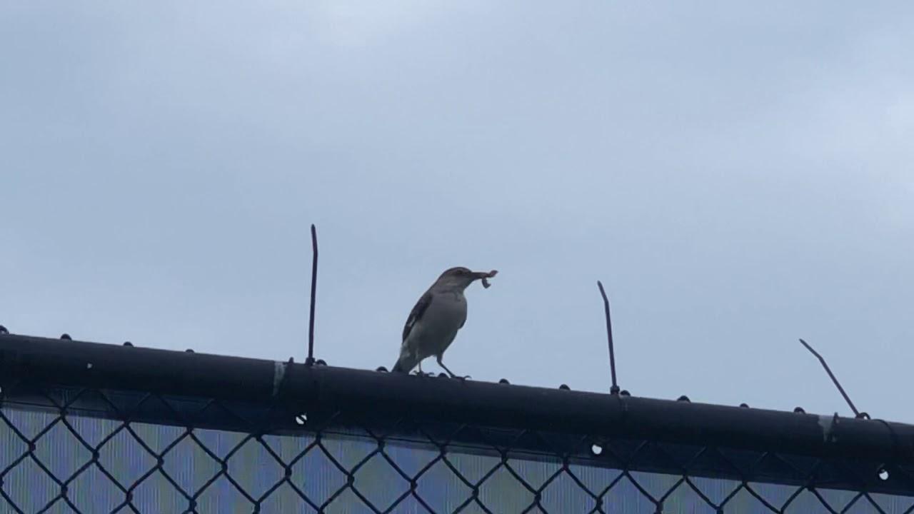 Bird missing her nest? - YouTube