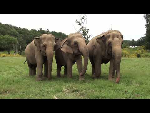 The Elephant Sanctuary   CrowdRise Holiday Charity Challenge 2018