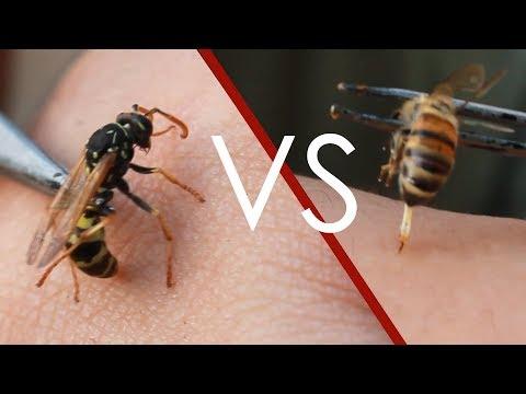 Eşek Arısı vs Bal Arısı Sokması