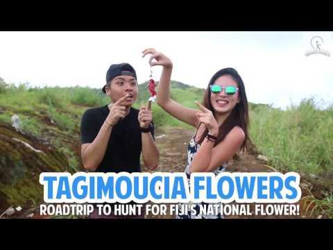 Tagimoucia Flowers - Roadtrip To Hunt For Fiji