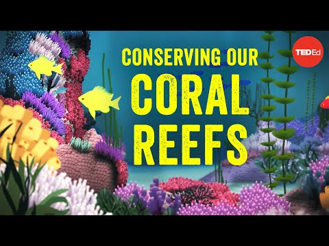 Video image: Conserving our spectacular, vulnerable coral reefs - Joshua Drew