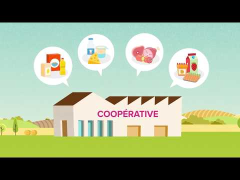 What's an agricultural cooperative ?