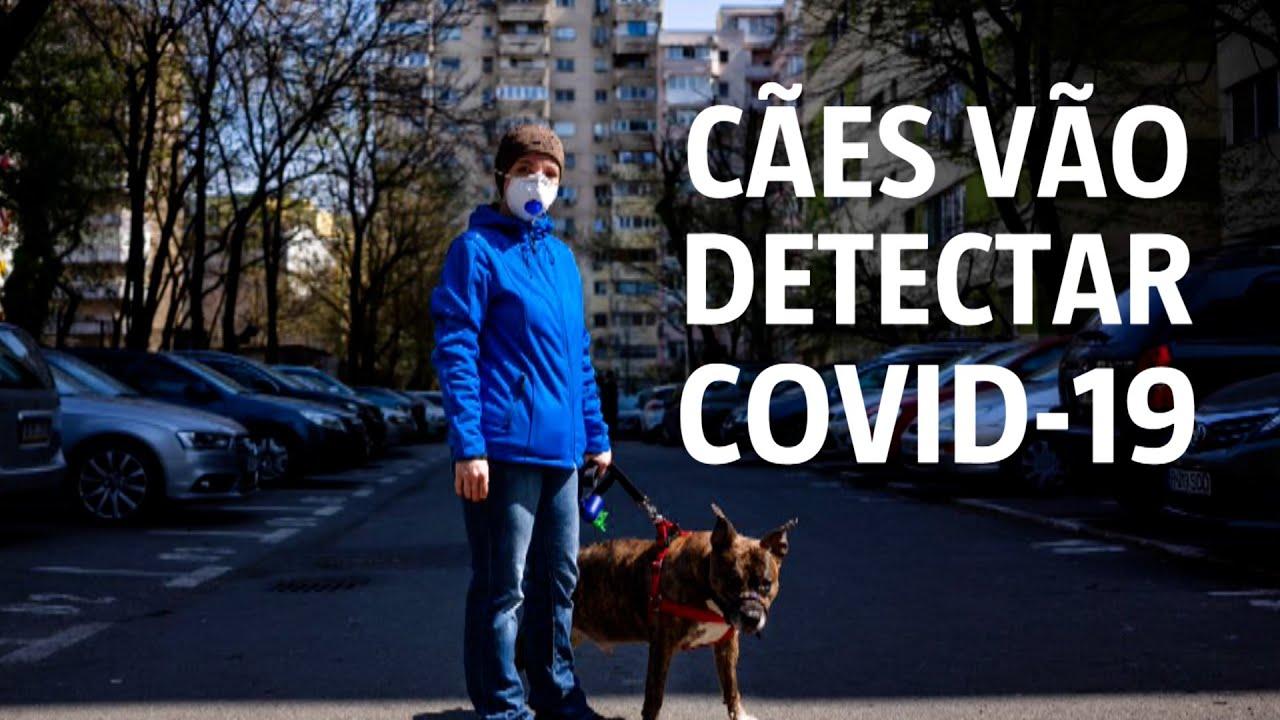 Vídeo: Cães são treinados para detectar pessoas infectadas com ...