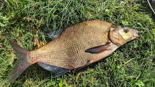 Ловля леща фидером на реке. Вкусный обед на рыбалке.