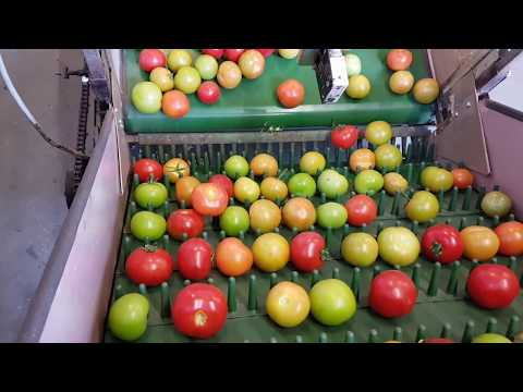 DS Hortitrade - Aweta Tomato Grading Machine