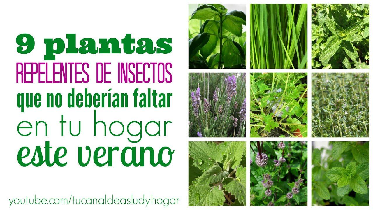 Plantas repelentes de insectos que deber as tener en tu - Plantas para ahuyentar insectos ...