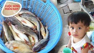 Xem thu mua cá vừa đánh bắt của gia đình nhỏ ven sông #namviet
