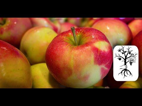 Wie Lagert Man äpfel