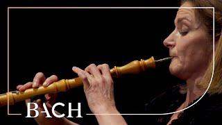 Bach  Oboe Concerto in F major BWV 1053r  Black | Netherlands Bach Society