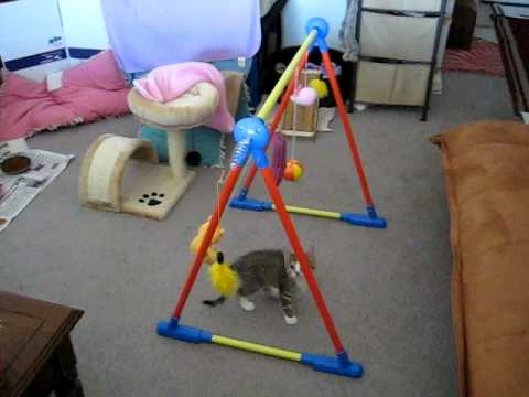 Kitty Karsen Jungle Gym Video 61