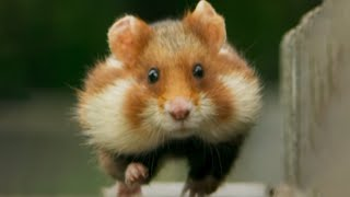 The cutest animal ever?