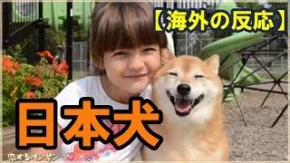 【海外の反応】世界中で日本犬が大ブーム!「みんな我が家で引き取って...