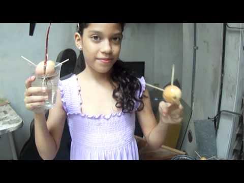 Como sembrar un rbol de aguacate ii parte youtube for Como cultivar aguacate