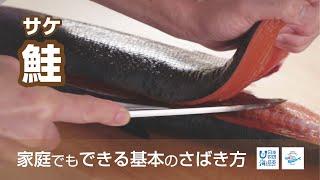 鮭(さけ)のさばき方 - How to filet Salmon -|日本さばけるプロジェクト