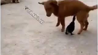 Bebek dan anjing memegang titid