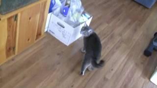 Aquarium Stand Cat Launcher