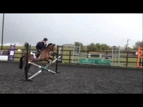 Talented Pony Club Allrounder for sale