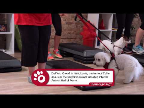 K9 FIT CLUB AND DOGTV PRESENTS: Sit, Stay & Get Fit