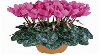 """Мой фильм """" Опасные и ядовитые комнатные растения"""""""