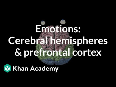 Emotions: cerebral hemispheres and prefrontal cortex | MCAT | Khan Academy