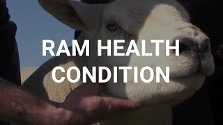 Ram health condition
