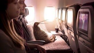 Sam descubrió una Mejor Forma  de Volar con Air New Zealand