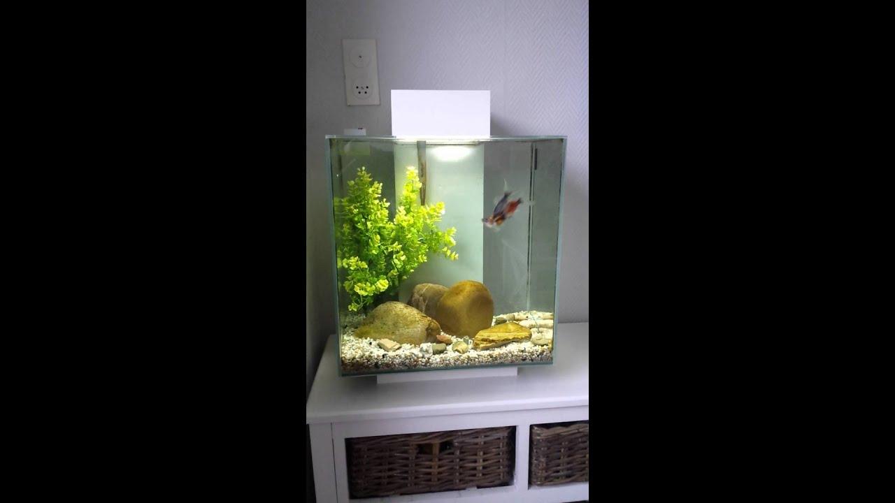 Fluval Edge Goldfish Part 2  Youtube