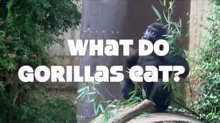 What Do Gorillas Eat?