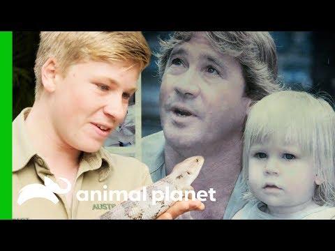 Robert Irwin is Following in Steve Irwin's Footsteps