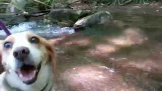 Beagle's Grand Adventure Hike