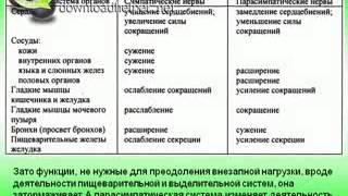 Вегетативная (автономная) нервная система.AVI