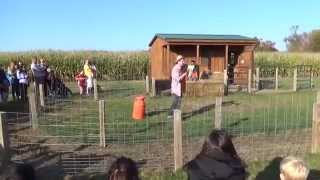 PIG RACES at