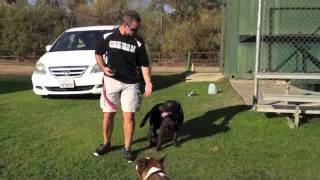 Sit Means Sit Dog Training San Diego - Immersion Board & Train