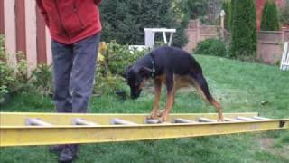 Jessie Climbing Ladder-Building Dog's Confidence