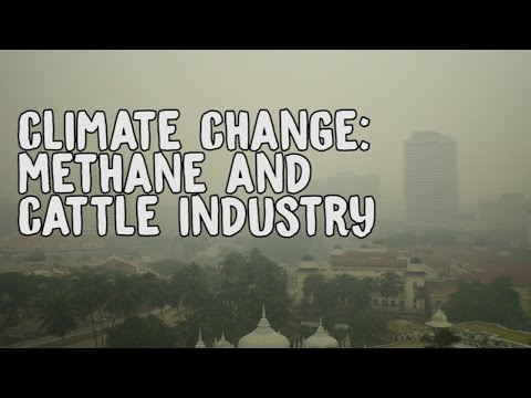 Climate change: methane and cattle industry