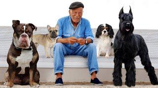 The 10 Best Dog Breeds For Seniors