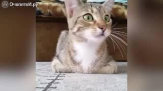 Кот смотрит ужастик