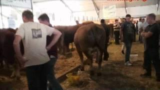Arrivée de Déserte au Sommet de l'élevage