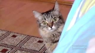 The cat is planning something evil (кот задумал что-то недоброе) thumbnail