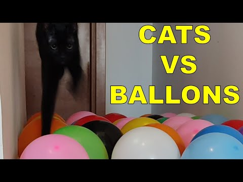 Cute Cats Playing With Balloons | Funny Balloons Challenge