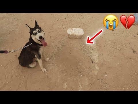 ردة فعل كلبتي لوسي بعد موت بنتها !! انصدمنا