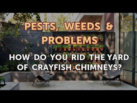 How Do You Rid The Yard Of Crayfish Chimneys?
