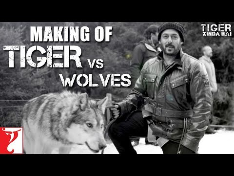 Tiger vs Wolves | Making of Tiger Zinda...